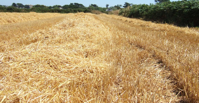 Straw and ecology